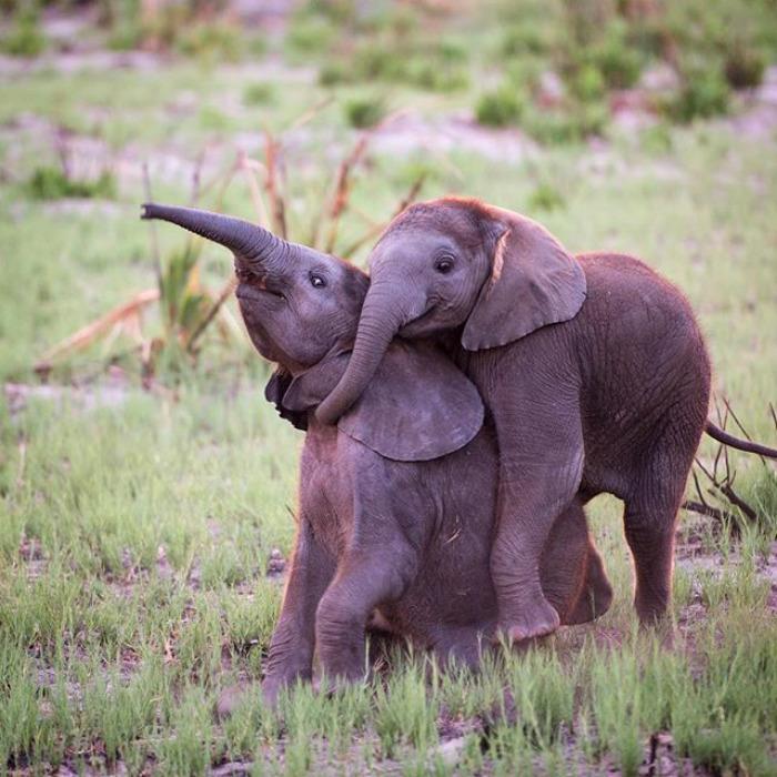 Обнимающиеся слоники