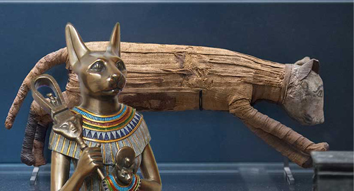 В Египте кошки были божественны. Это стоило египтянам исторического поражения.