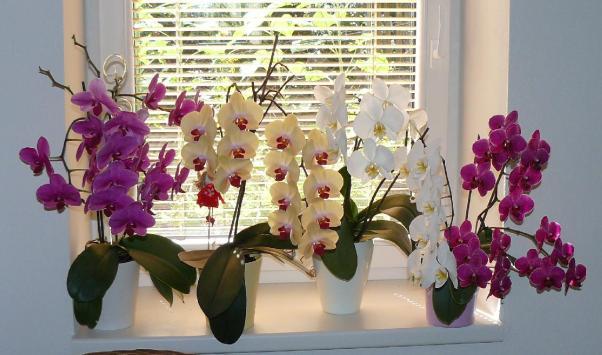 Условия содержания орхидей