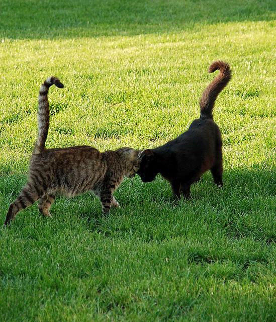 Кошачье свидание. Фото