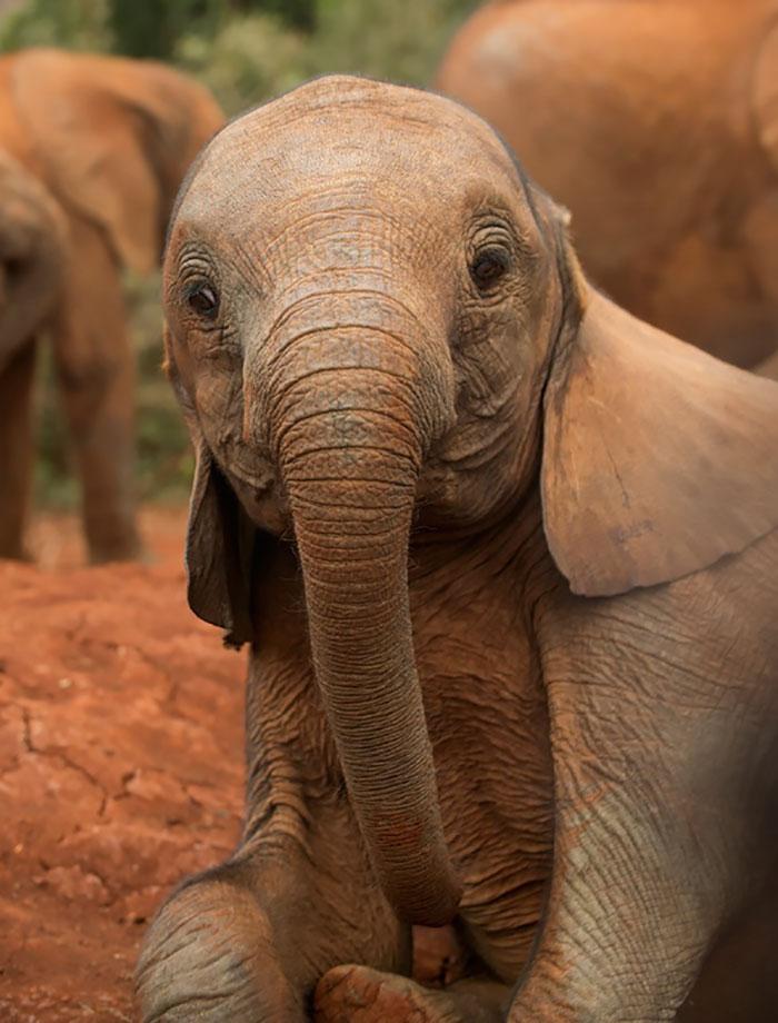 Детеныши слона