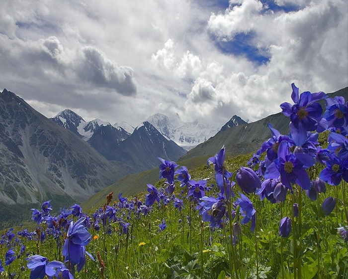 Altai_motives (700x560, 455Kb)