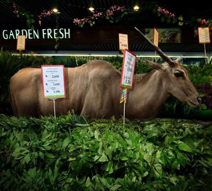 CuriousAnimals05 Животные в супермаркете