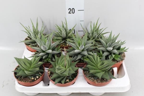 Комнатные неприхотливые растения: какое выбрать?