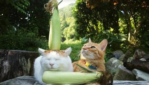 Главное - чувство равновесия! животная мода, животные, животные и люди, коты, показ мод, смешно, фото, шляпки