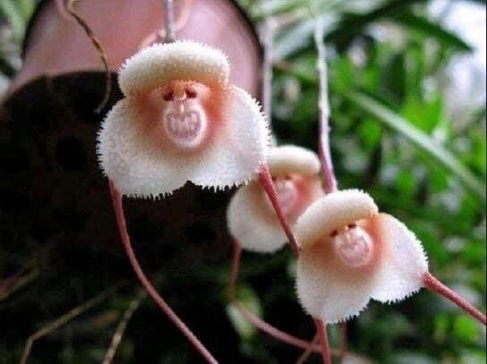 Что же натворили обезьянки, что стали цветочками? животные, обман зрения, подборка, показалось, прикол, удачный кадр, фото, юмор