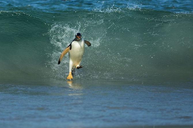 30 лучших снимков National Geographic за год