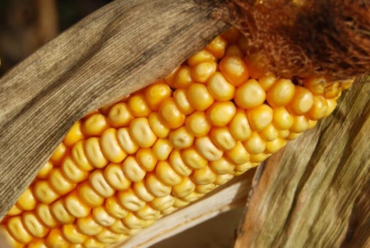 genmod06 7 ГМО продуктов, которые вынесут вам мозг