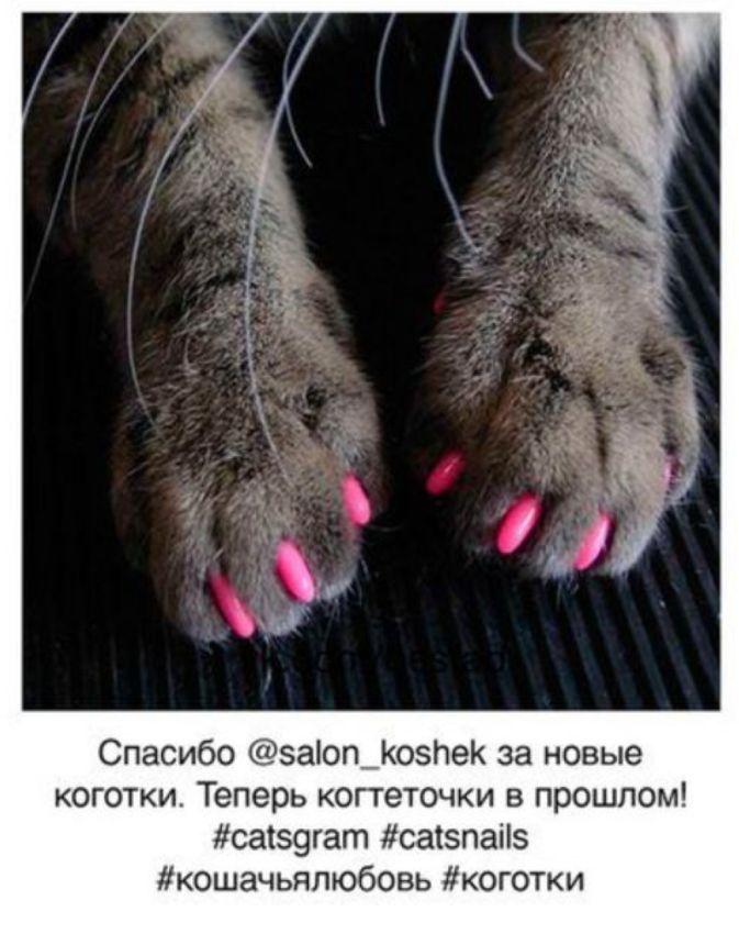 Если бы коты вели инстаграм