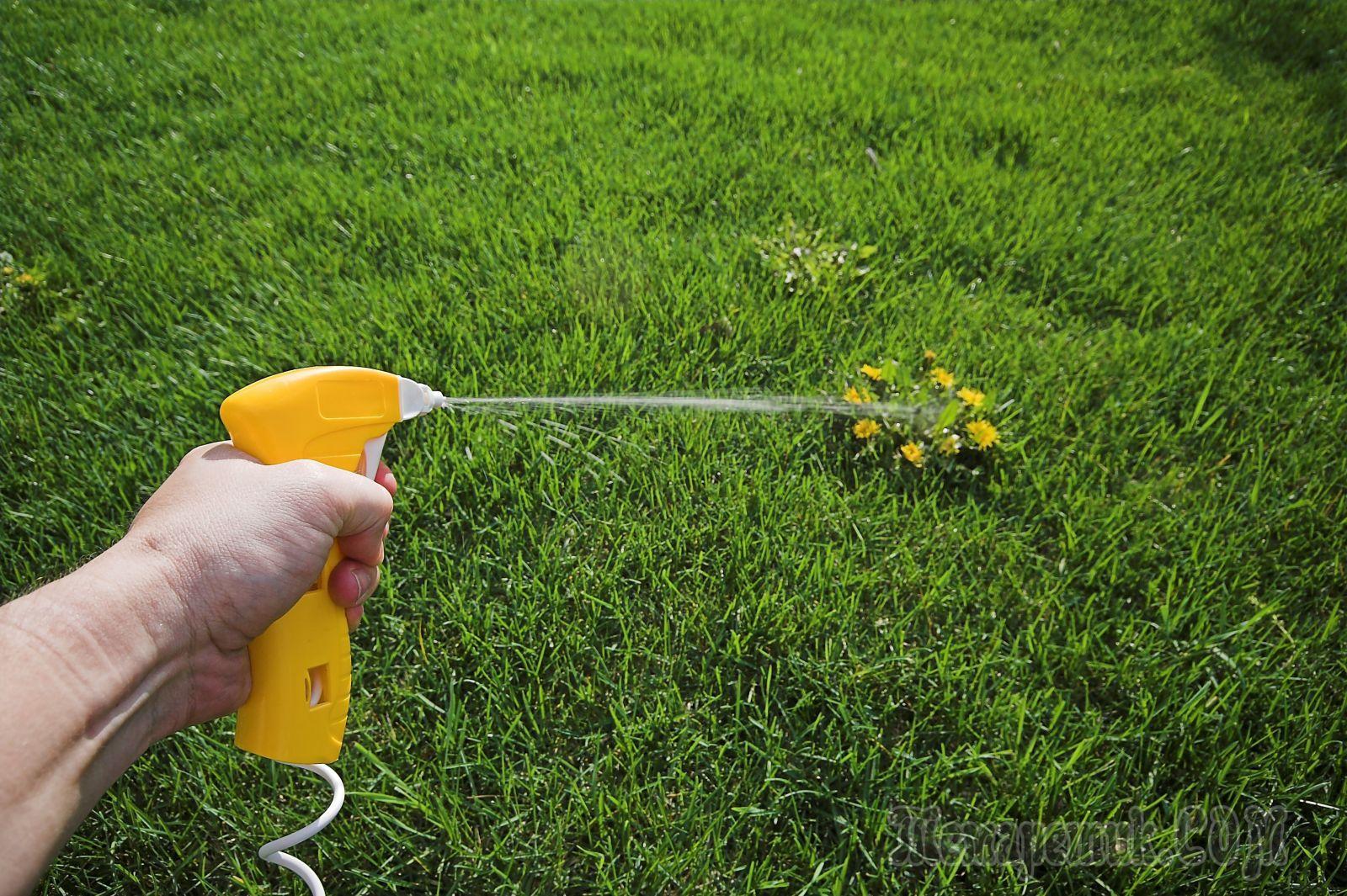 Уксус от сорняков – как приготовить раствор, правила применения