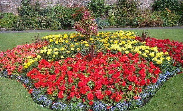 15 однолетников с красными цветками – яркие краски в вашем саду Сад и огород,Цветник