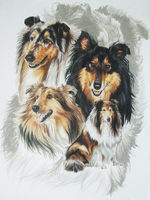 Collie_wGhost_19x24WC-CP_2009 (525x700, 59Kb)
