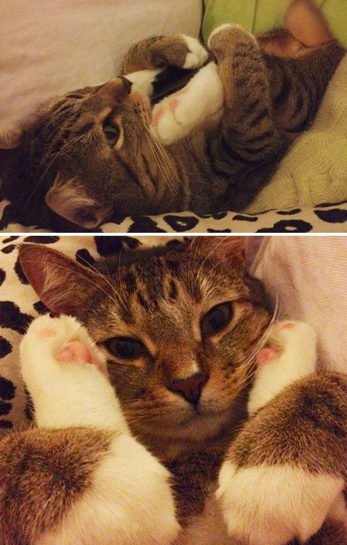 смешные коты, кошки которые ведут себя странно