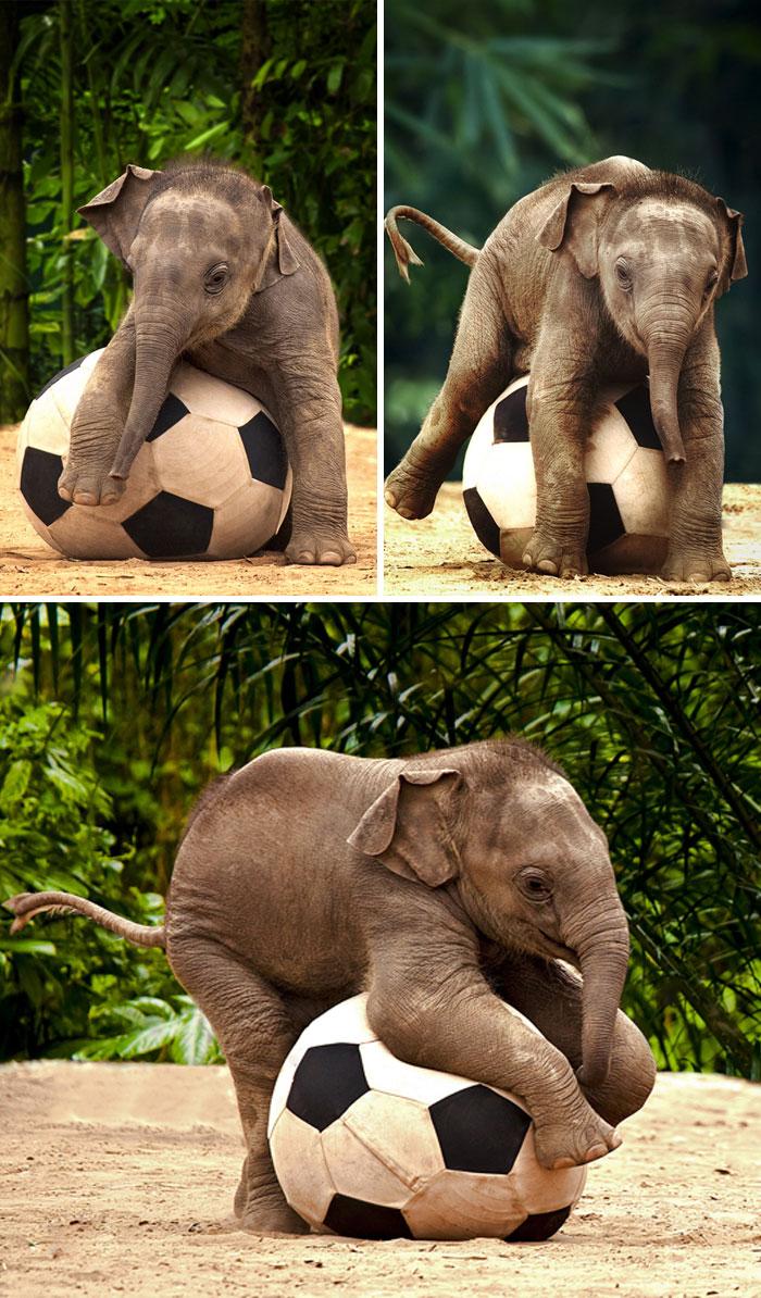 Маленький слон с мячом