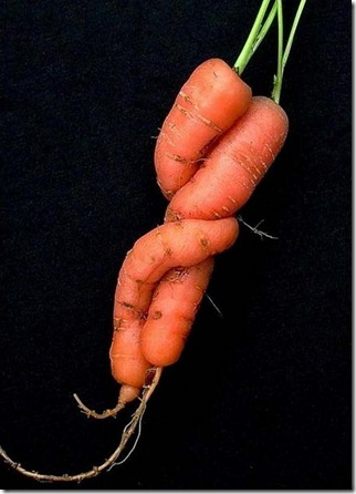 unusual-fruit-and-vegetables11