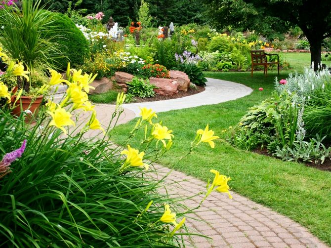 Какие неприхотливые декоративные кустарники для дачи посадить