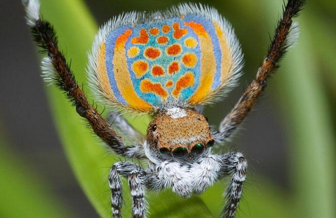 Новые виды животных, открытые в 2014 году