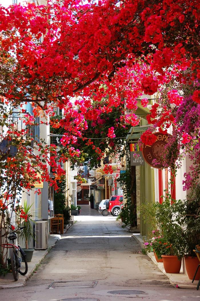 15 самых волшебных улиц в тени цветов и деревьев дерево, улица, цветы