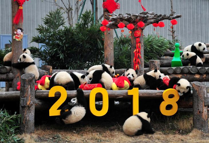 16 февраля вступил в свои права Китайский Новый год