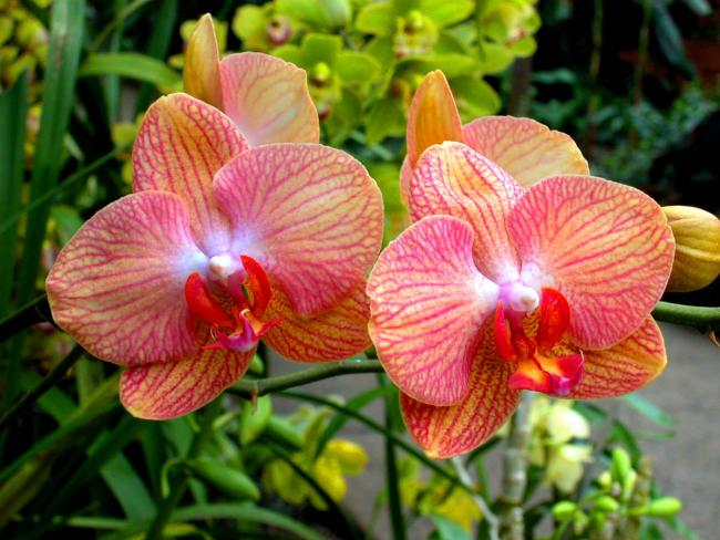 Яркие красивые орихидеи