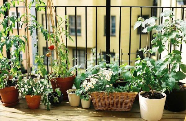 16 очаровательных сезонных идей для сада на балконе фото 1