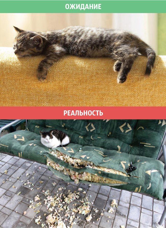 Жизнь с котом, ожидание против реальности, кот ожидание против реальности