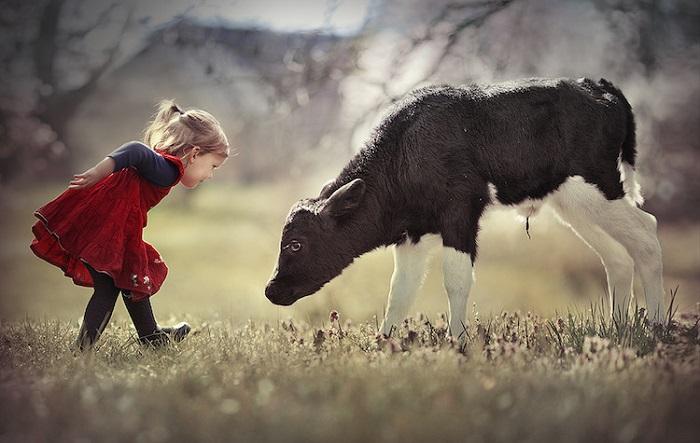 Многообещающее знакомство с теленком.