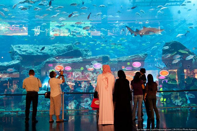 Огромный аквариум в Дубае