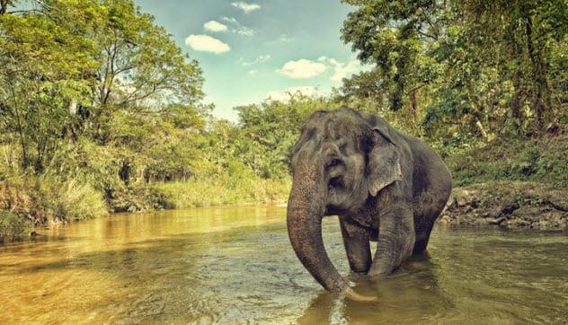 Топ-10 впечатляющих примеров самолечения в мире животных