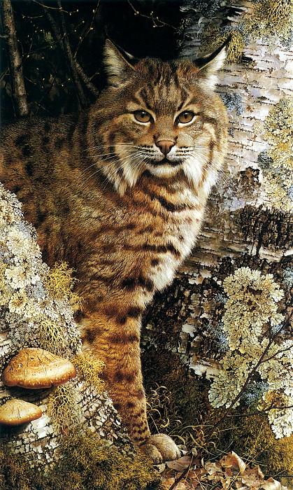 kb Brenders Forest Sentinel. Карл Brenders