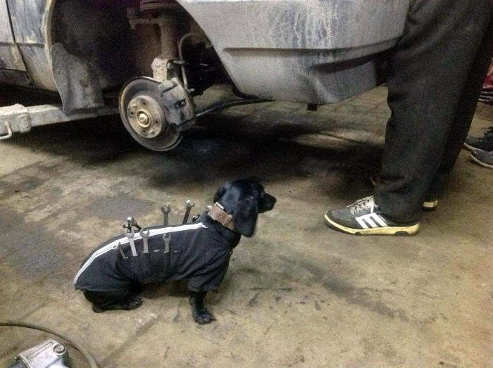 Собака-подавака. | Фото: www.drive2.ru.