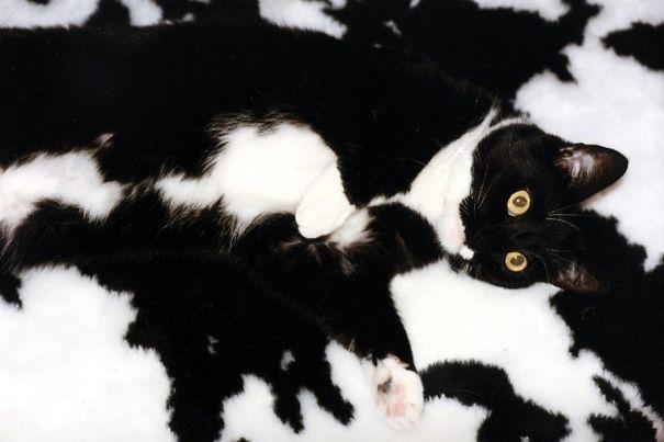 коты мастера маскировки, коты прячутся