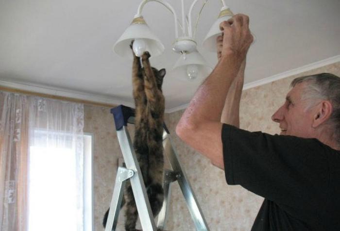 Кот и электрика.