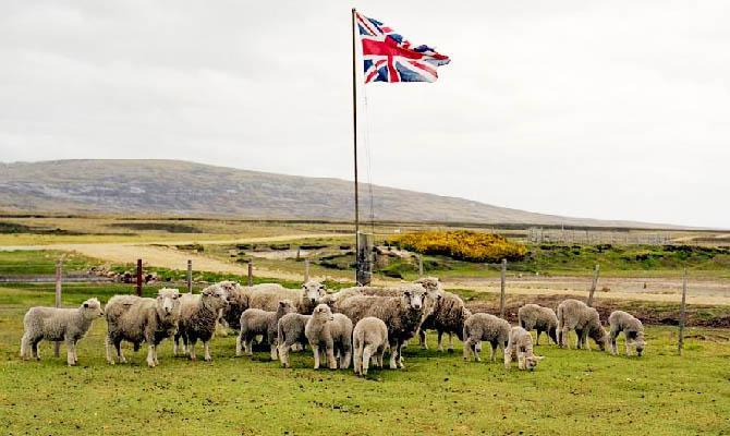 Фолклендские острова, овцы, Интересные факты о Странах Мира