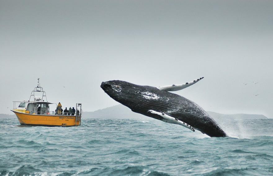 этого картинки гигантского кита крик что