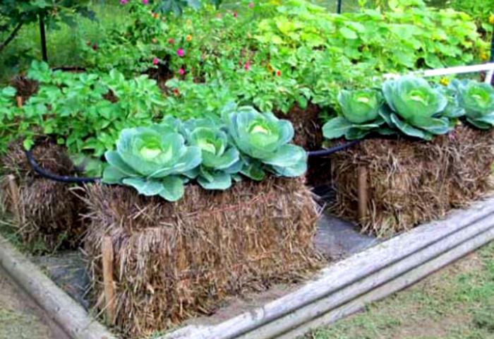 Маленькие грядки из сена. | Фото: Фермер.