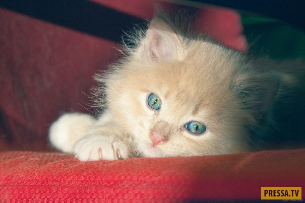 Котики тоже любят загорать (25 фото)