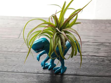 «Воздушные» растения: 14 забавных идей для дома фото 14