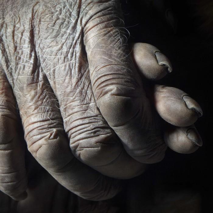 Твоя рука в моей руке. Автор: Tim Flach.