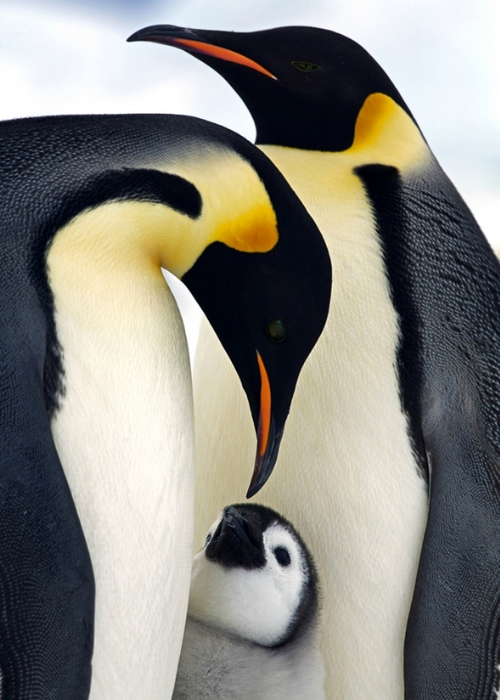 Удивительные фотографии птиц