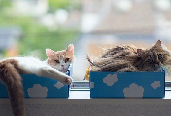 Соорудите спальное место для кошек на подоконнике