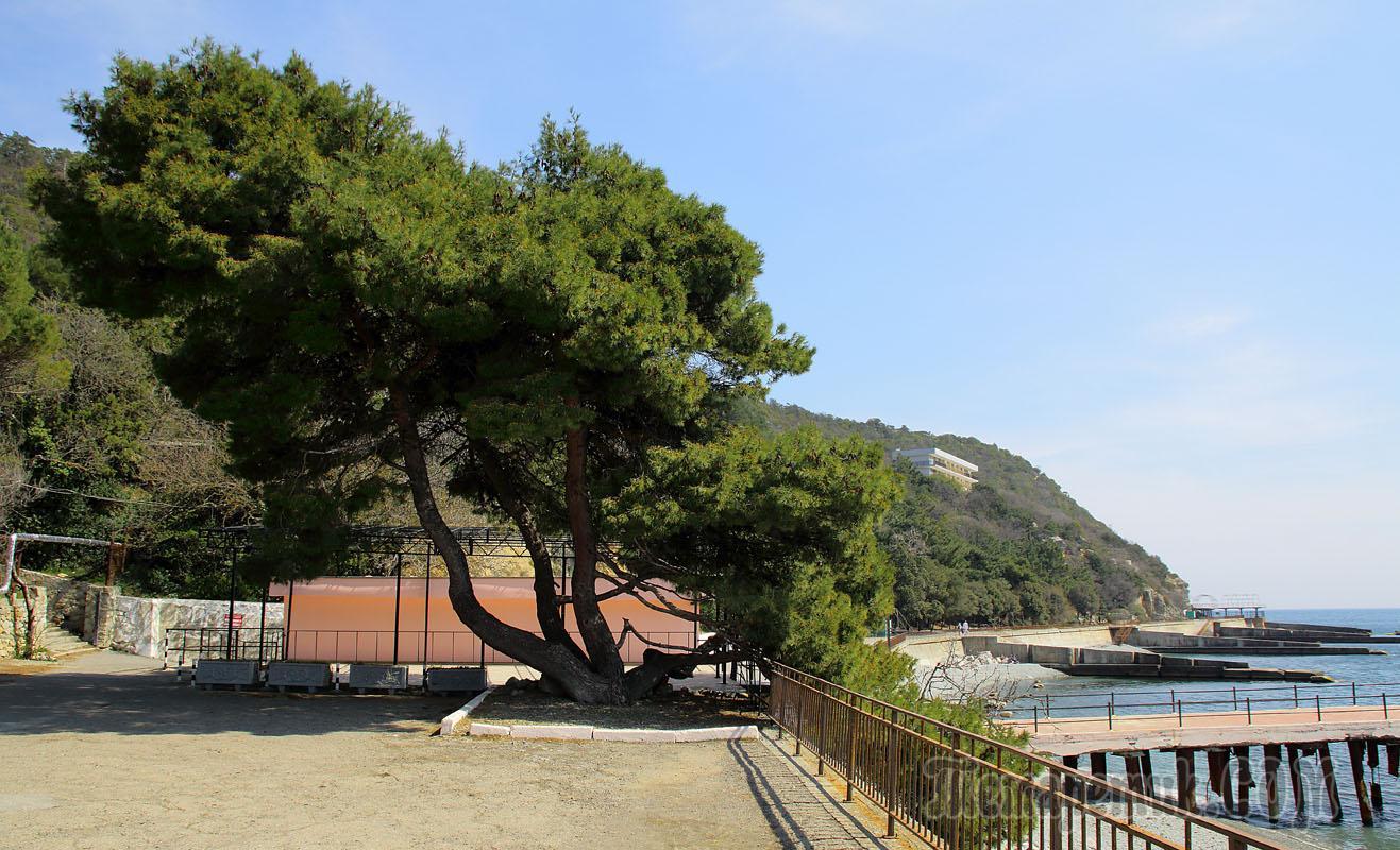подала гибсона фото пляж никитский ботанический сад вам останется