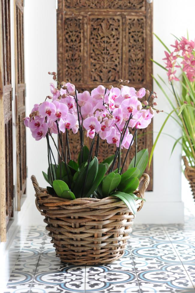 Очень гармонично в интерьере выглядит плетеная корзина с орхидеями