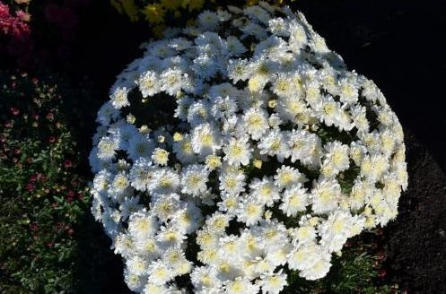 Branfountain White