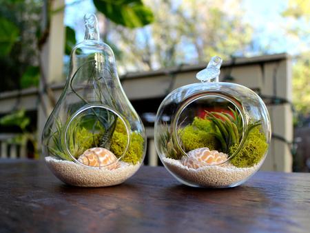 «Воздушные» растения: 14 забавных идей для дома фото 3
