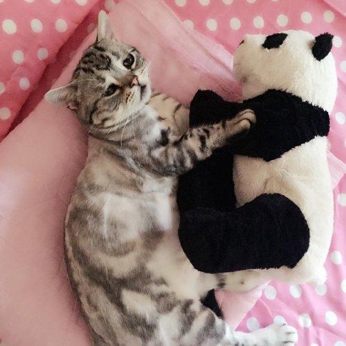 Луху, самая грустная кошечка в Интернете (14 фото)