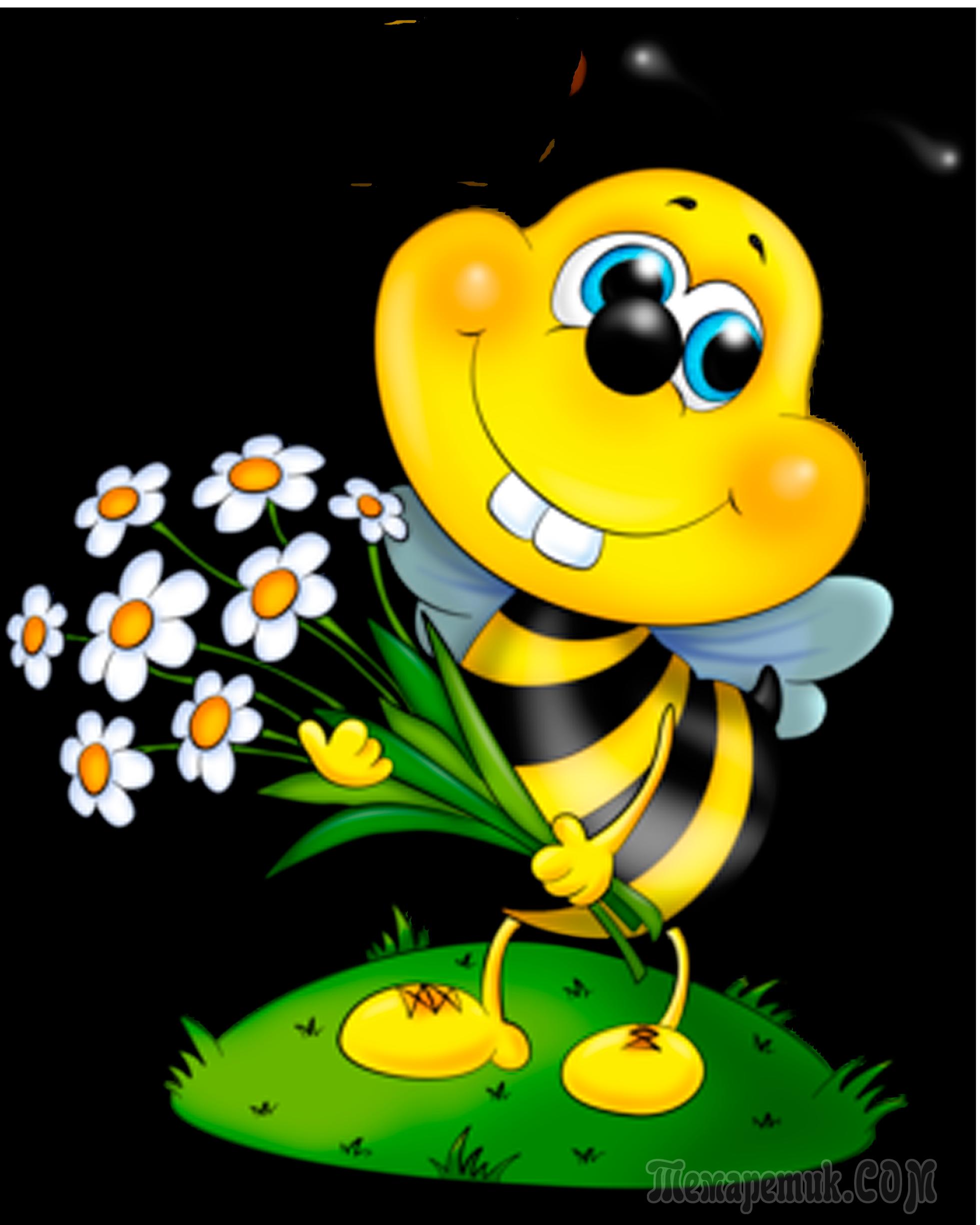 живые открытки картинки веселая пчелка майя вот
