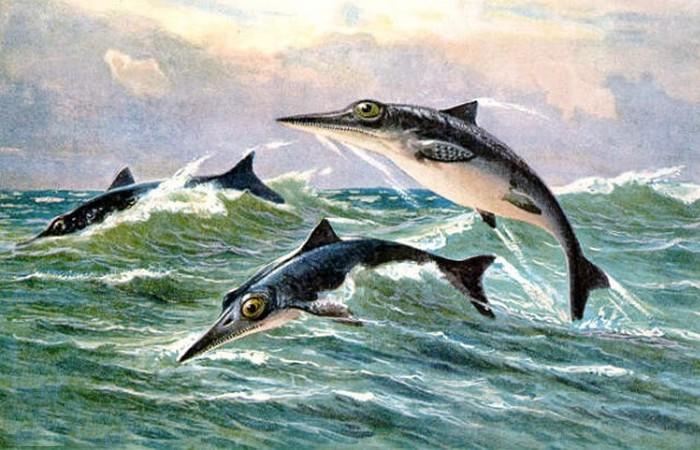 Дельфинообразная рептилия.