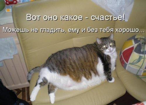 Котоматрица -2  - Страница 3 Fullsize