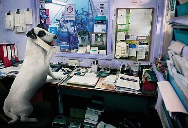 Смешные фотографии собак. Собаки автомеханики.